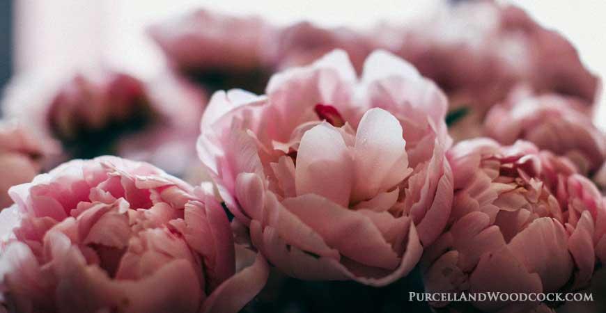 Flower Pettles