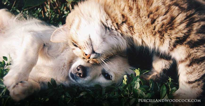 Affection Cat & Dog